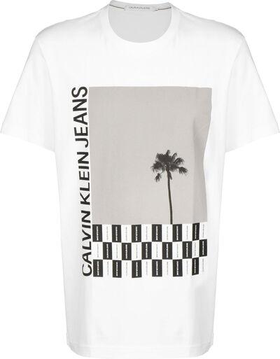 Palm Tree Photo Rel